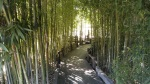 Bamboo forest in the Japanese Garden